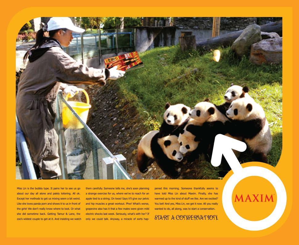 Maxim - Panda